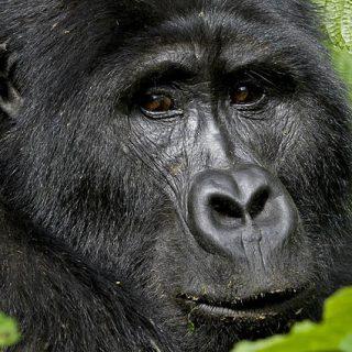 4 Days Gorillas & Volcano Hike