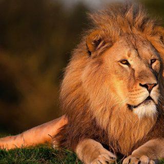 3 Days Queen Elizabeth Wildlife Tour