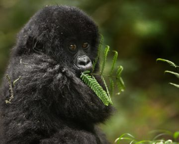 7 Days Uganda Primates & Wildlife Tour
