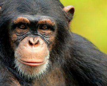 5 Days Uganda Primates Expedition
