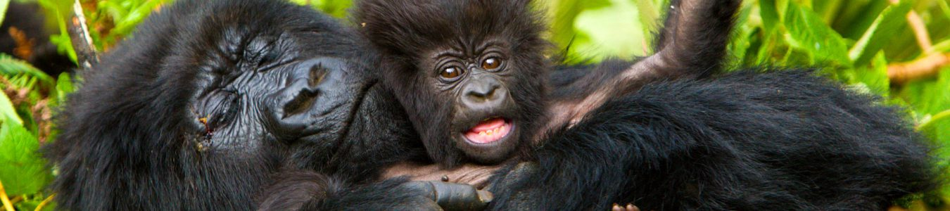 4 Days Bwindi Gorillas & Lake Bunyonyi Safari