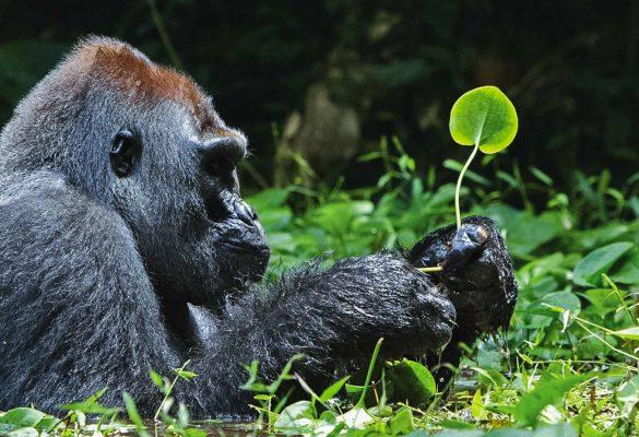 Uganda Gorilla Trekking From Kigali in 3 Days