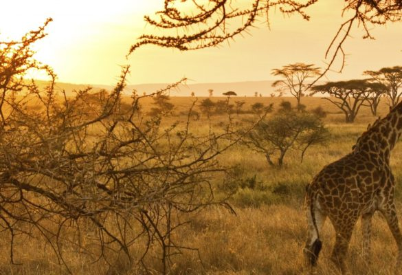 3 Days Serengeti & Ngorongoro Wildlife Safari