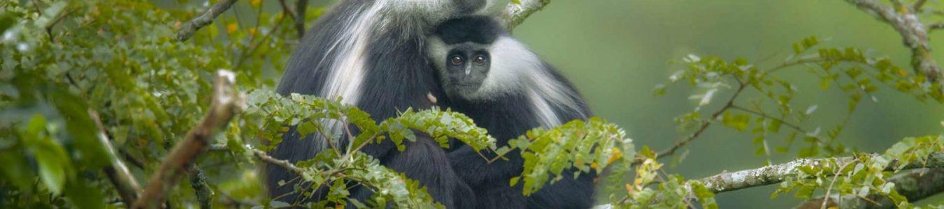 5 Days Rwanda Congo Primates Safari