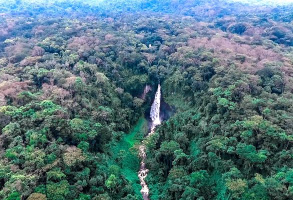 Kahuzi-Biega National Park Congo