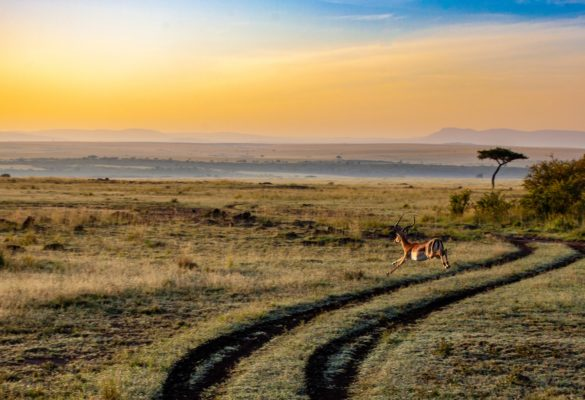 9 Days Explore Kenya Safari